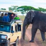 tanzania-elephant-safari.jpg