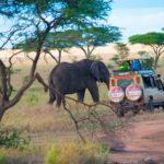 tanzania-elephant-safaris.jpg