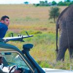 elephant-tour-tanzania.jpg